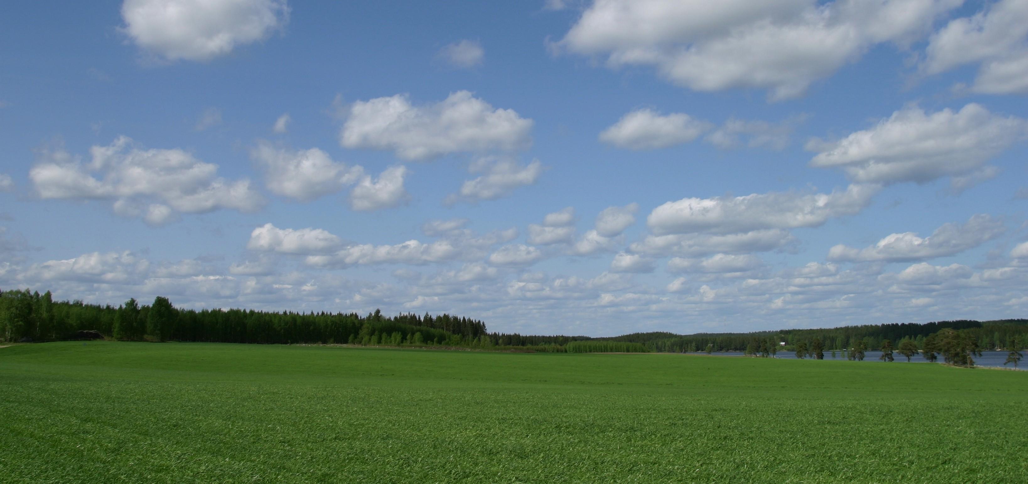 Green spring crop